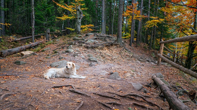 Dog on hiking trail in autumn forest (vacation, travel, holiday, concept)