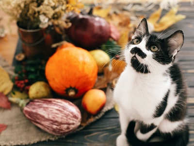 Cute cat sitting at beautiful Pumpkin in light, vegetables on bright autumn leaves, acorns, nuts on wooden rustic table. Hello Autumn. Fall season. Happy Thanksgiving concept