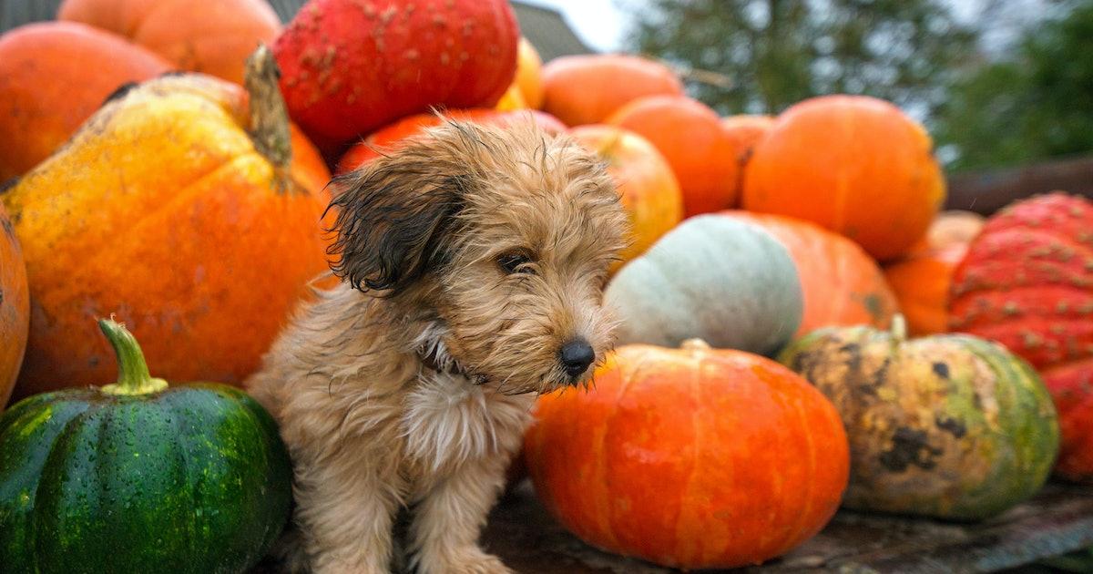 17 November Dog Names To Inspire An Attitude of Gratitude