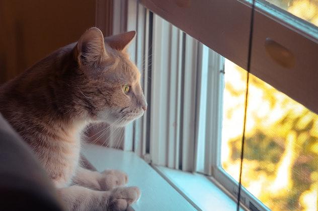 Orange Cat portrait shot in front of surreal background