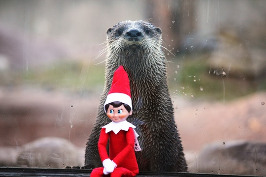 Cute Otter with Elf on the Shelf
