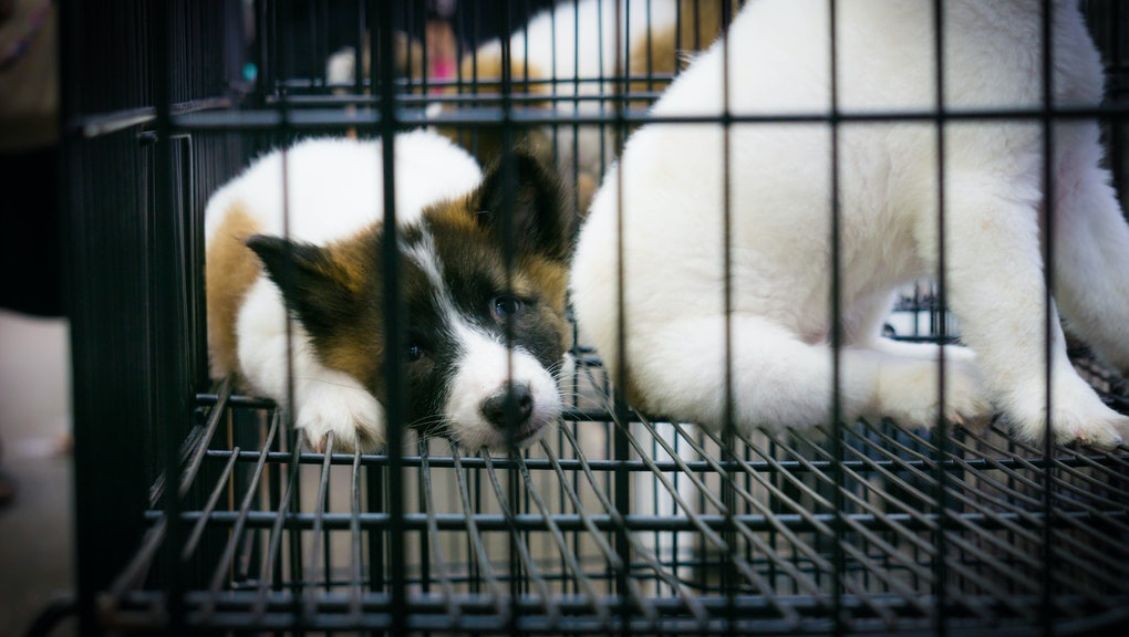 lonely puppy in cage with soft focus