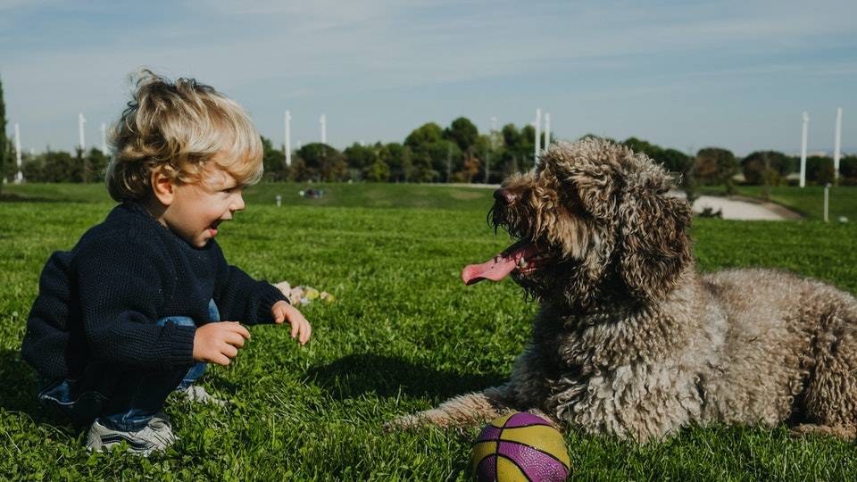 Small and sweet blond boy playing with his nice brown spanish water dog. Enjoying the park on a sunny autumn day. Lifestyle.