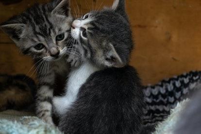 Little stray kittens play outside