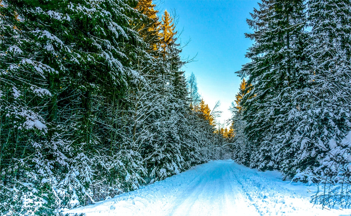 Winter road in winter nature forest
