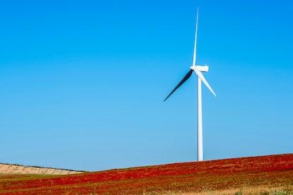 Wind turbine on hillside in a field of red poppies (Papaver rhoeas) Almargen, Malaga, Andalucia, Spa...