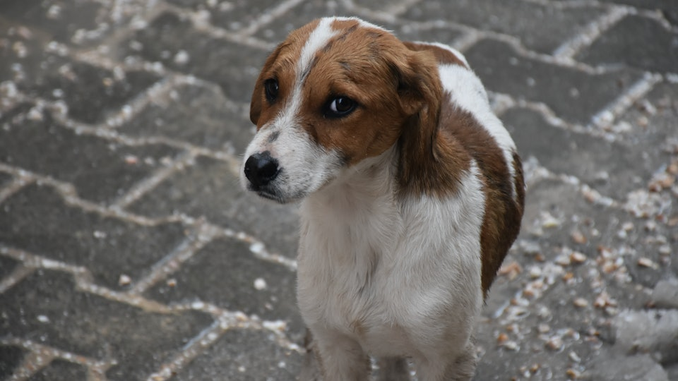Cute Puppy Outside