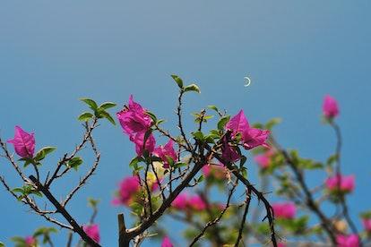 Solar eclipse in Bintan Island, Indonesia.