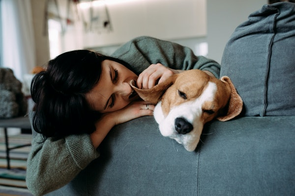 A woman and a sleeping beagle dog relax on a sofa.