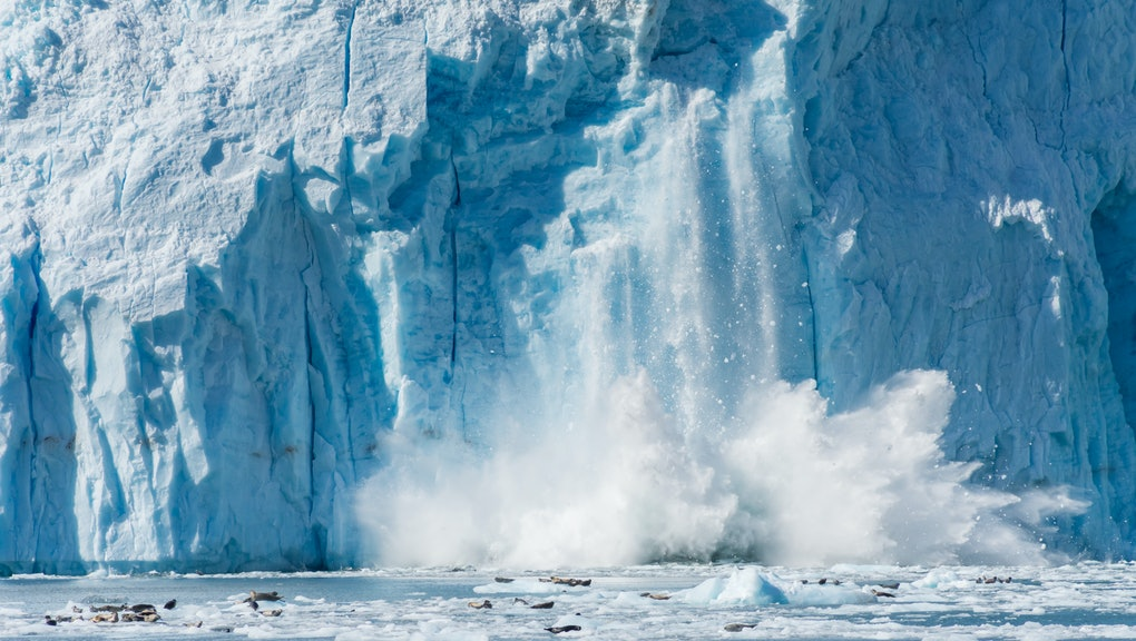 An Actively Calving Glacier with Wildlife