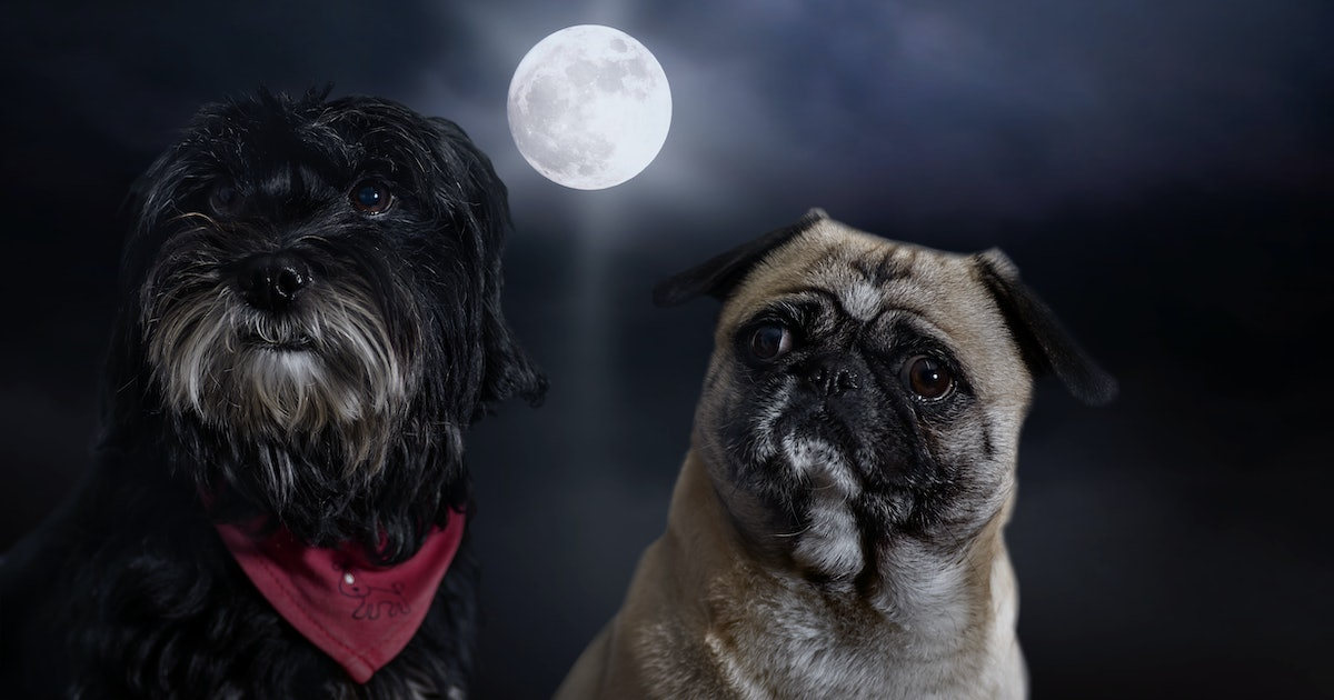 Does Mercury Retrograde Affect Dogs? Here's How Your Pooch Could Be Impacted