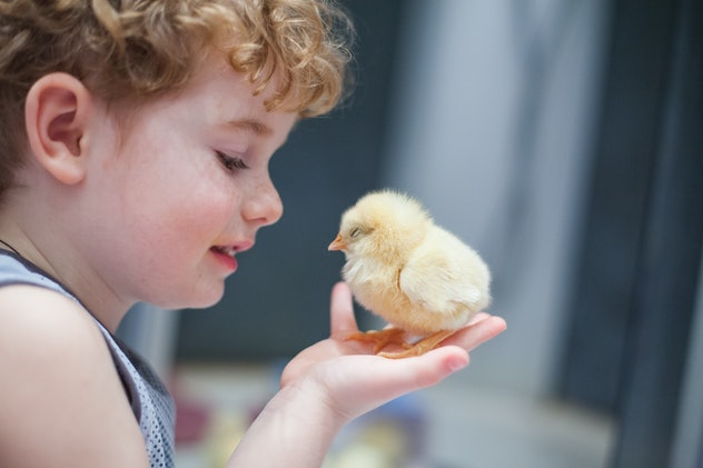 the boy's face with freckles close-up with a yellow chicken on the hand on a background of the room, a boy and a bird, best friends, chick and kid.
