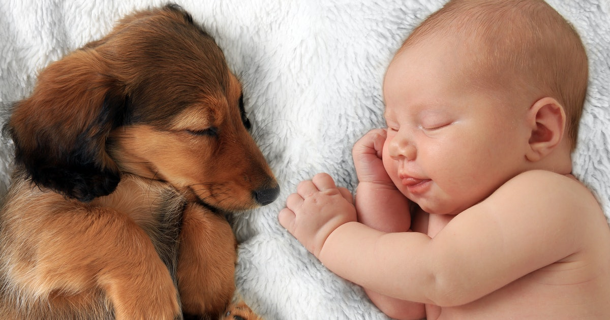 22 Baby & Dog Photo Shoot Ideas You'll Want To Steal ASAP