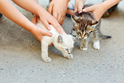 Children's hands petting two little wild kittens. The concept of respect for human animals.
