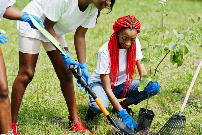 Group of happy african volunteers planting tree in park. Africa volunteering, charity, people and ecology concept.