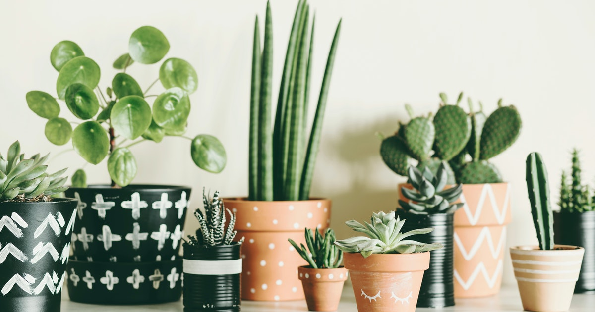 7 Tips For Looking After Houseplants When You're On Holiday & Can't Provide The Love IRL
