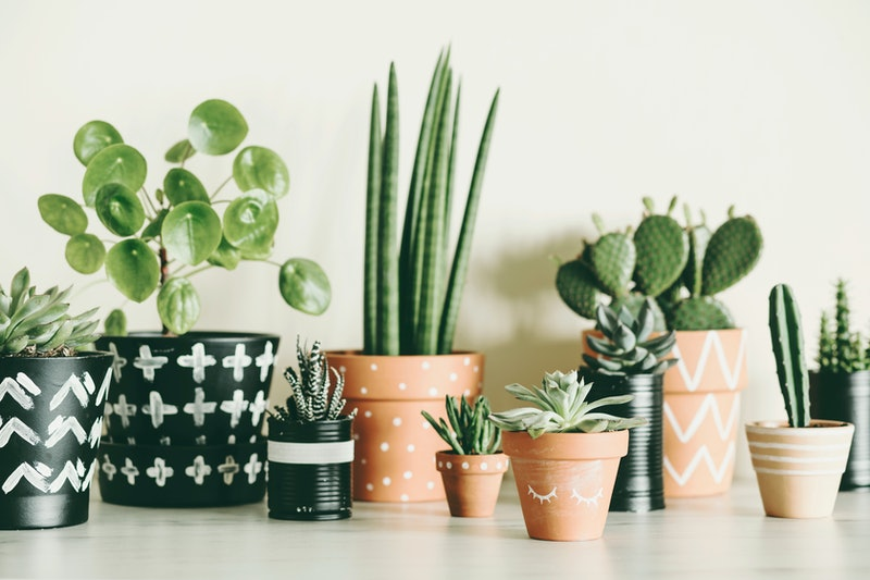 Modern composition of home garden filled a lot of plants in different hipster pots. White background wall of home garden.