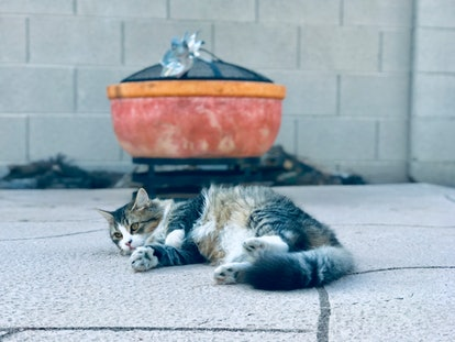 Cat outside relaxing