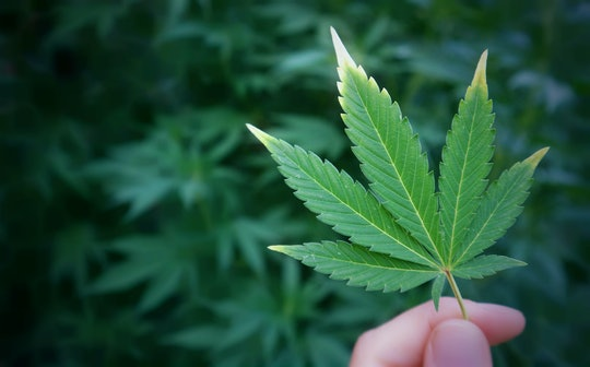Cannabis leaf in hand, marijuana plant drug herb nature photo.