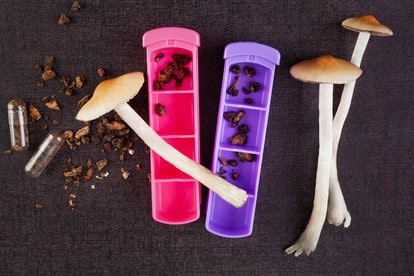 Fresh and dried psychedelic mushrooms in gel caps and pill box. Alternative medicine. Microdosing. M...