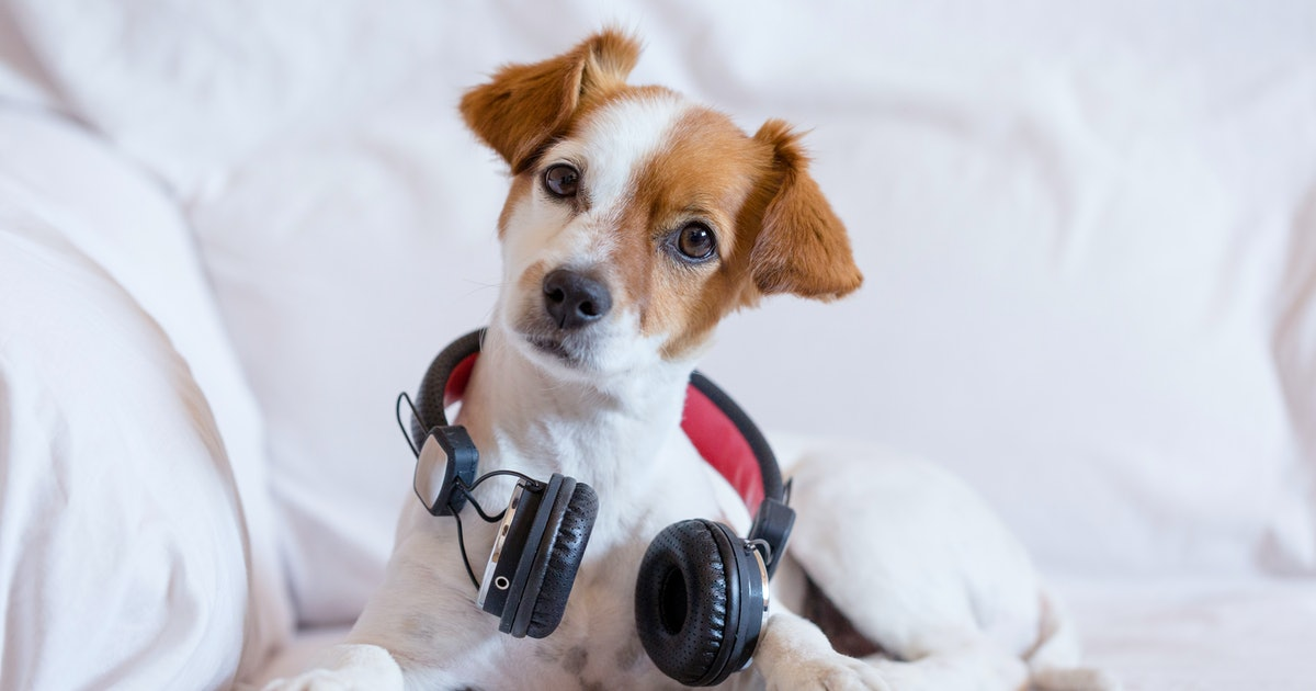 What music do dogs love? Here's what experts recommend you play for your pet
