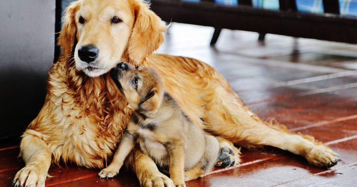 Should I Get A Second Pet? TK Signs Your Current Pet Will Be OK With Another Animal In The House