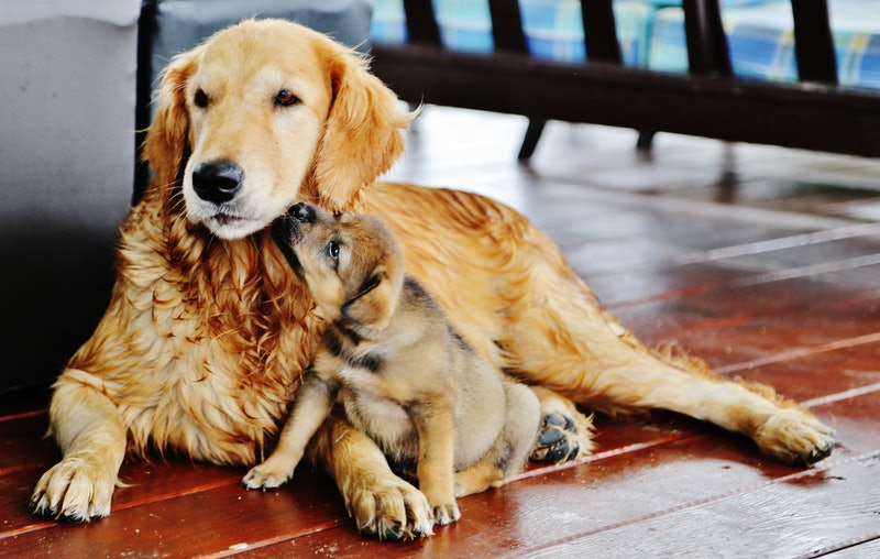 dog and puppy