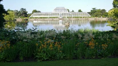 Kew Gardens Victorian Palm House In Summer