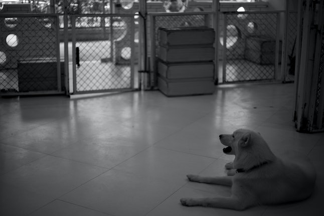 Large caged dogs