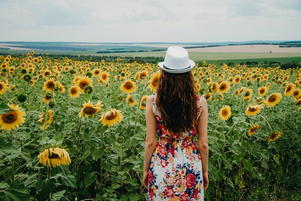 A girl in a summer dress and a white hat is standing back to frame looking at a beautiful blooming field of sunflowers.