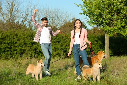 Young couple with adorable Akita Inu dogs in park