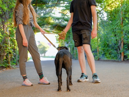 Young couple walking with dog on a leash on asphalt sidewalk. Strong black labrador and stafford terrier mix breed in green summer park