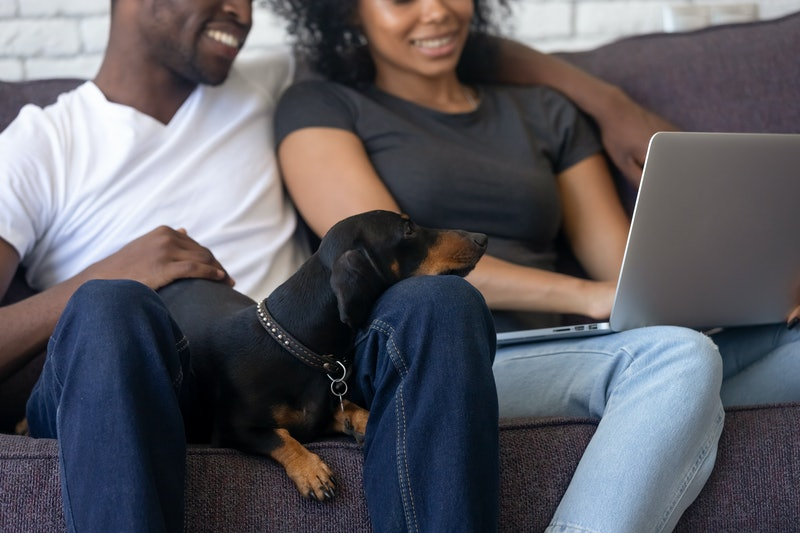 Clever dachshund dog lays down on black family knees enjoys relaxation looking at laptop screen, smiling african couple use computer watching video, shopping with funny pet sitting on couch at home