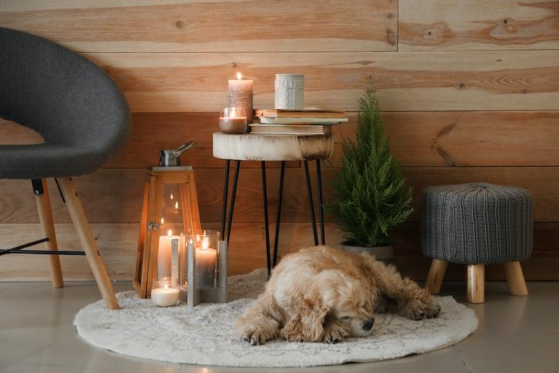 Cute dog sleeping near burning candles in room