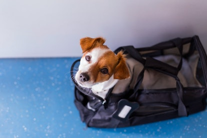 cute small dog in his travel cage ready to get on board the airplane at the airport. Pet in cabin. T...