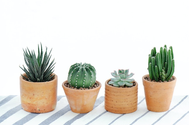 Various type of cactus and succulent house plant in clay pots white background