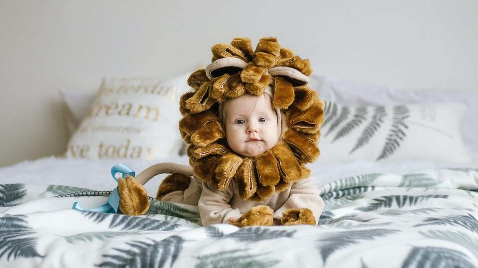 Handsome plump little child in a lion costume. A little boy in the costume of an animal.
