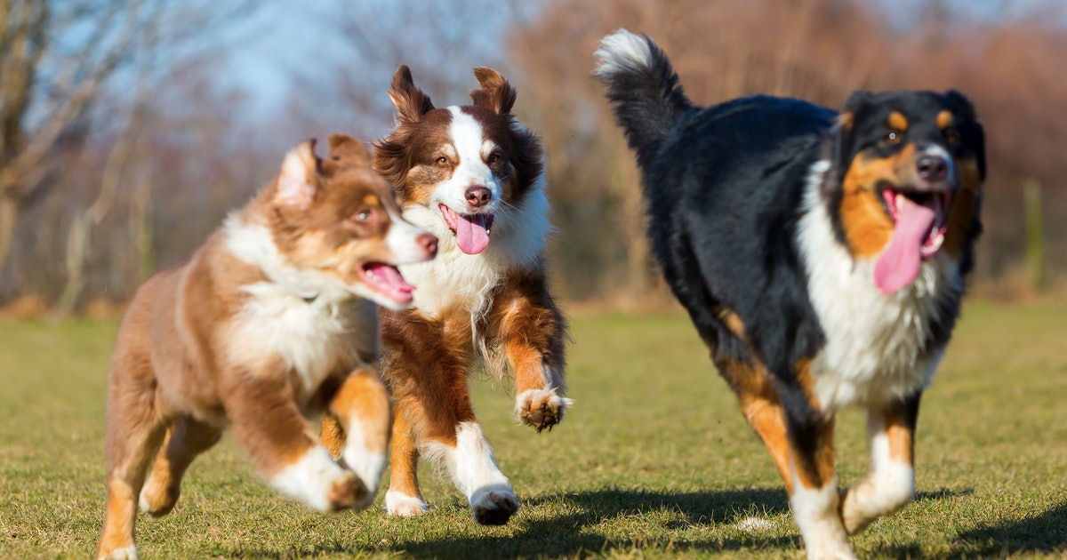 10 dog park tips that'll help you avoid issues with other pets — or their owners