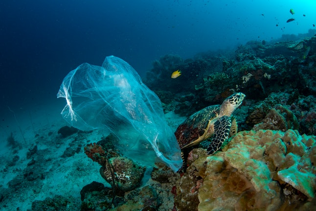 Sea turtle and plastic bag underwater