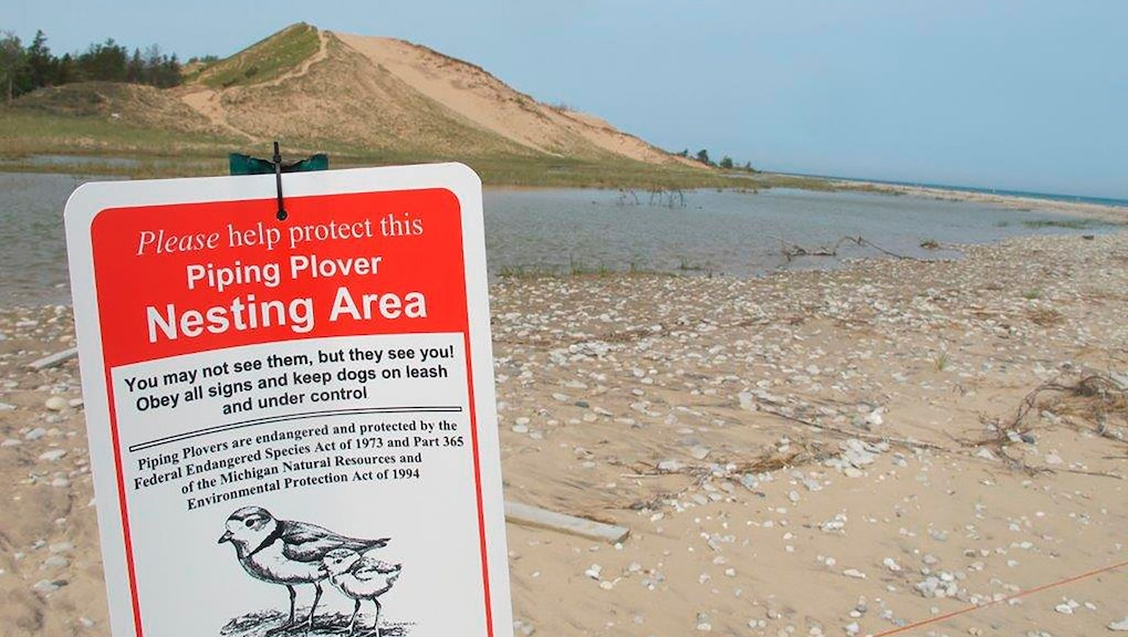 A sign warns visitors of a piping plover nesting area in Glen Haven, Mich. Trouble is brewing for the piping plovers, already one of the Great Lakes region's most endangered species, as water levels surge during a rain-soaked spring that has flooded large areas of the Midwest
