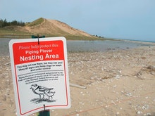 A sign warns visitors of a piping plover nesting area in Glen Haven, Mich. Trouble is brewing for th...