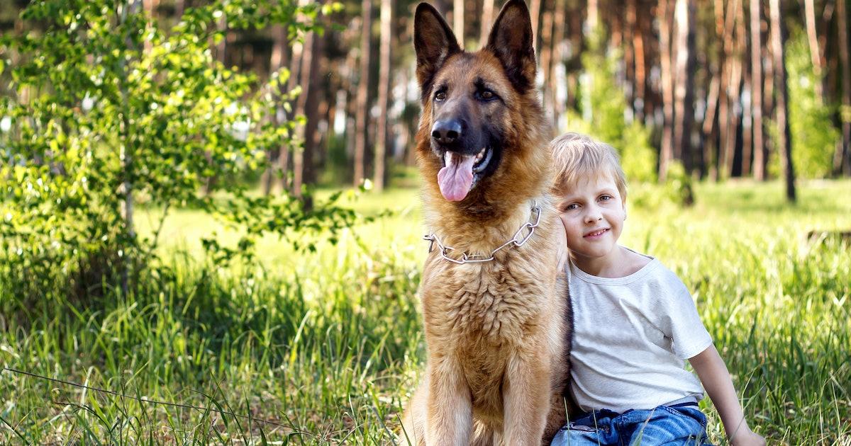 The 3 Smartest Dog Breeds, According To A Canine Behaviorist