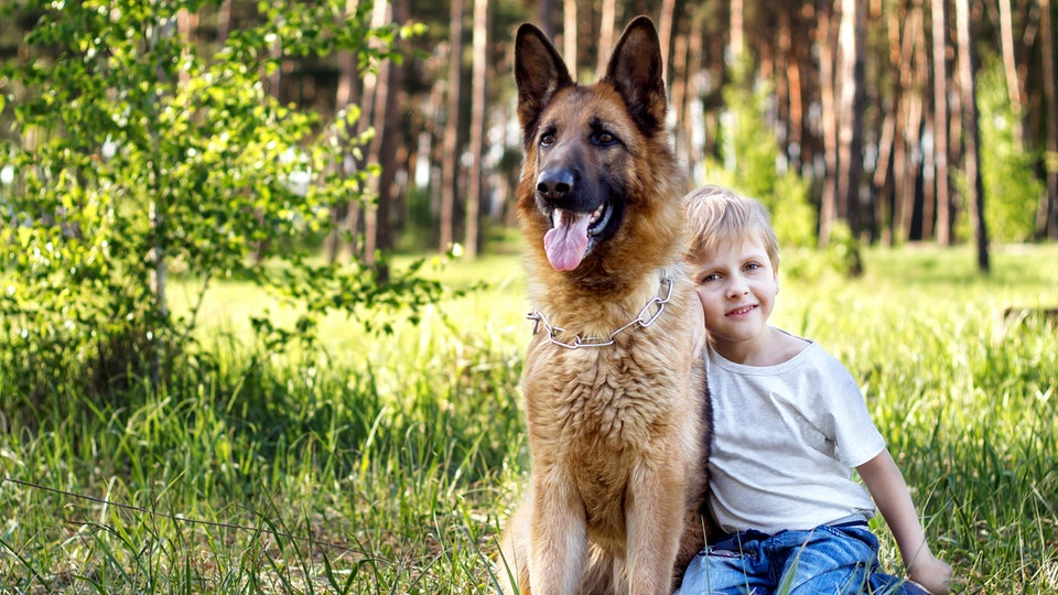 young boy relaxing and walking with German Shepherd in park