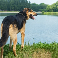 Portrait of a sad stray dog on the background of the lake