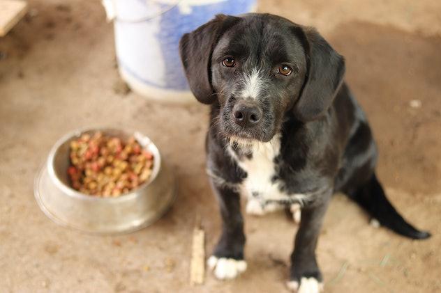 Sad dog with food on his plate