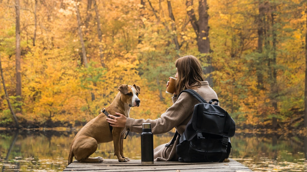 Tourist hiker girl sits at riverbank with her pet and enjoys beautiful indian summer sight with cup of coffee.Young female having rest near lake with her dog and looking at bright yellow autumn trees