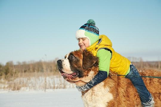 active little boy on horseback St. Bernard dog. child on a walk in the winter