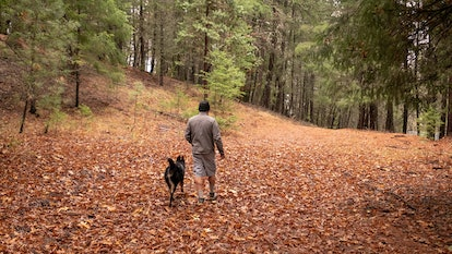 hiking in the wood with dog off leash