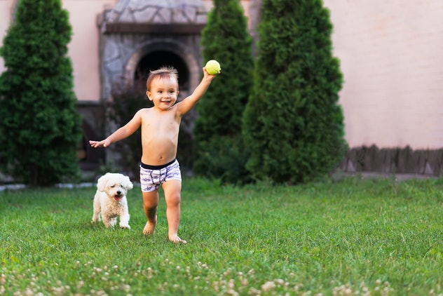 Little boy runs along the grass with his pet dog. A boy with a ball and white poddle on the grass. Children and pet relationship concept. Room for text