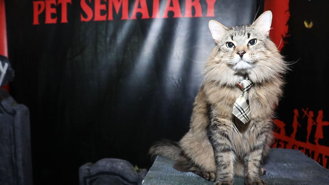 Church the Cat